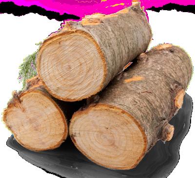 Schreinerei Nördlingen Holzstämme